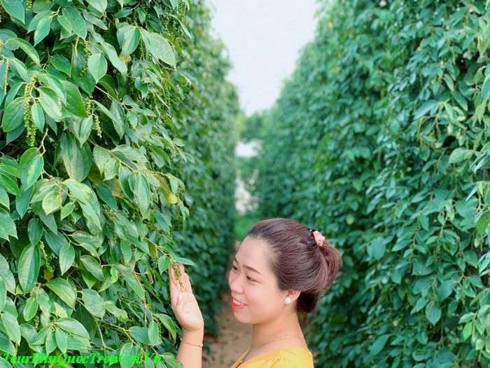 Tour Du Lịch Nghệ An Phú Quốc